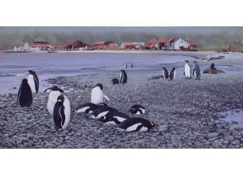 Stromness with King and Gentoo penguins