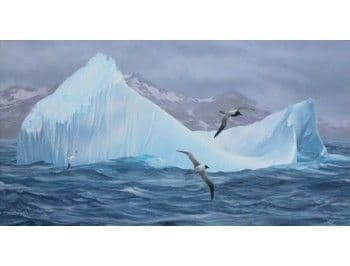Wandering and Light-mantled Sooty Albatrosses, South Georgia - size A3