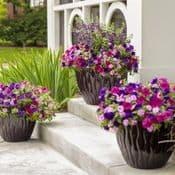 Bedding  & Basket Plants