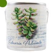 Farm Fresh Large Scented Candle in a a rustic ceramic pot -Echeveria Pulvinata - Fresh baked Cake