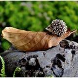 Fiddlehead-Hedgehog of a leaf