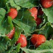 Garden Netting 2m x 10m - for Fruit & Veg - 15mm Mesh size.