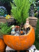 Hand Made Fresh Pumpkin Fairy Garden - collection only no delivery