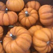 Miniature Pumpkin - Super tasty  - Fairy Pumpkin - Fresh