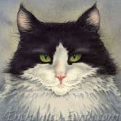Moongazer Greeting Card- Harvey The Cat