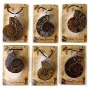 Real Fossil Pendant - Polished Ammonite Pendant with Adjustable Black neck cord.