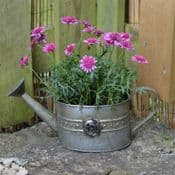 Rose Collection - Zinc watering Can Planter
