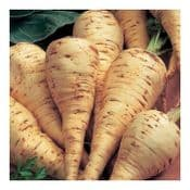 Strip Pack of 15 - Parsnip - Duchess F1 -  Young Plants